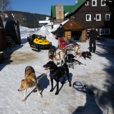 mushing-09DD50CD8A-3121-0E21-22C9-D646AE7332D8.jpg
